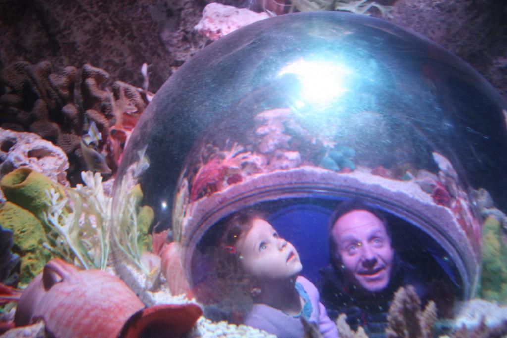 Inside the fish tank